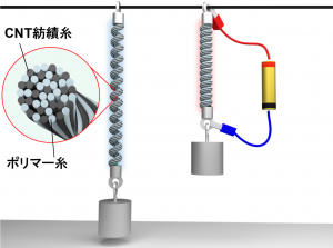 マルチフィラメント型カーボンナノチューブ/高分子ソフトアクチュエータ (soft-actuator of carbon nanotube yarn and polymer threads)_井上寛隆